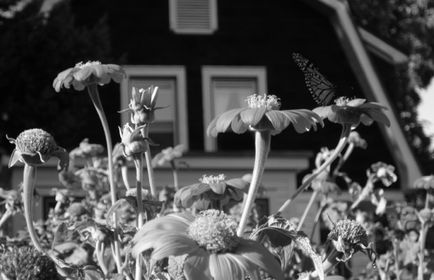 Zoe Webb's garden